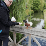 Feeding the ducks at Hever Castle
