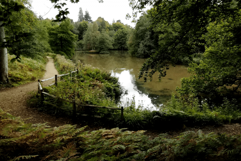 The view across Westwood Lake at Wakehurst