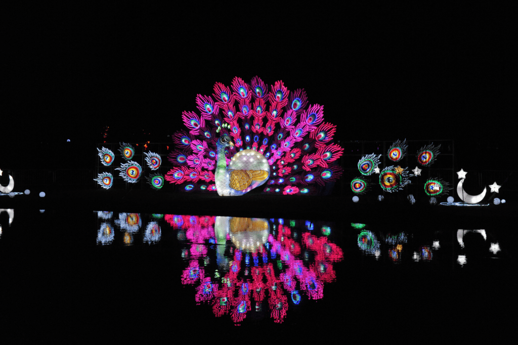 The peacock light display at the Lightopia festival at Chiswick House