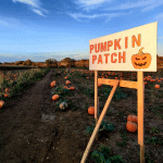 The Pumpkin Patch at Hatter's Farm